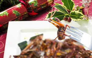 eat insects uk